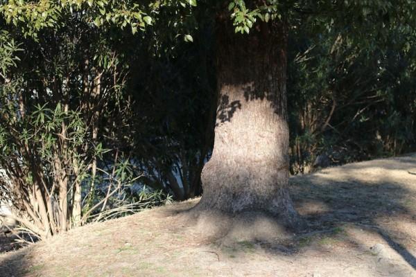 木の下で_11