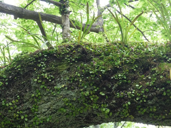 DSCF1249木の幹