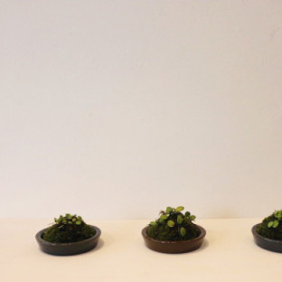bonsai-600x400-1