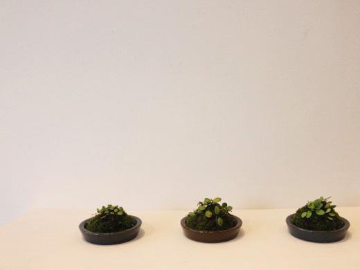 bonsai-600x400